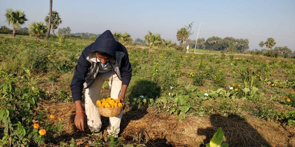 Regenerative Agroforestry in Durdih community.