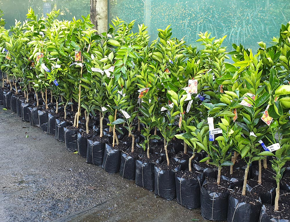 Arpen's tree nursery used to breed additional agroforestry species.