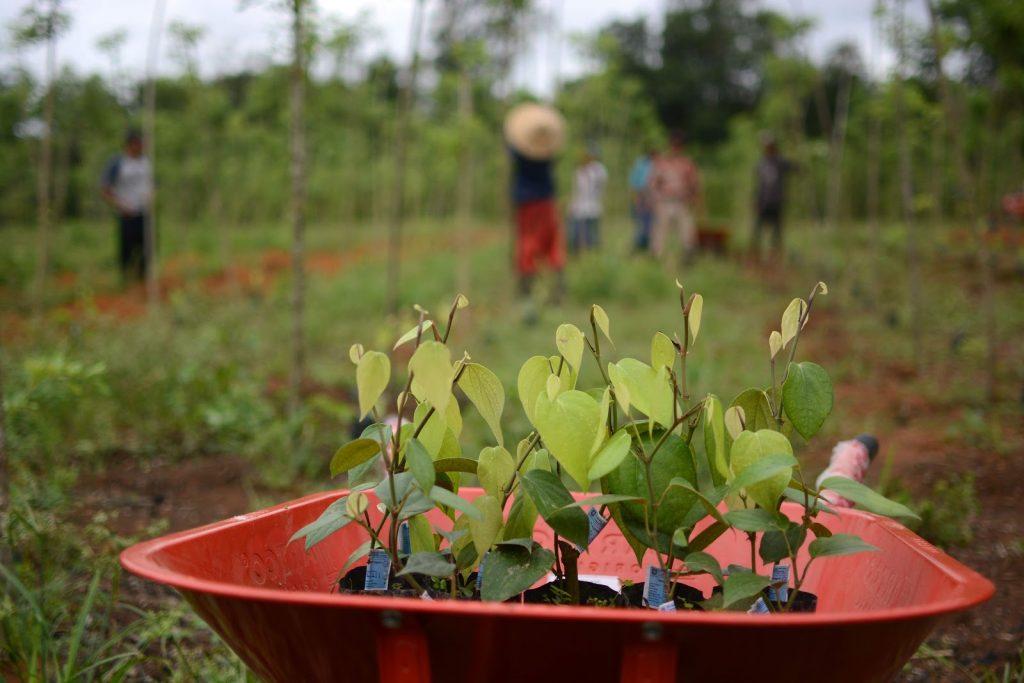 Sapling Agroforestry farm reNature
