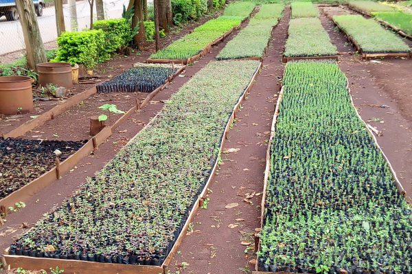 wable-seedlings-kenya